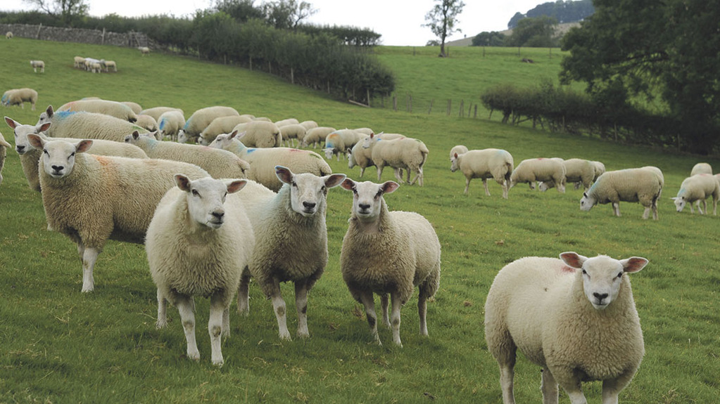 Benchmarking Northern Ireland Lamb