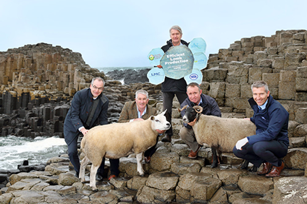 Launch of the Efficient Lamb Production event, at Giant's Causeway. Picture: Cliff Donaldson